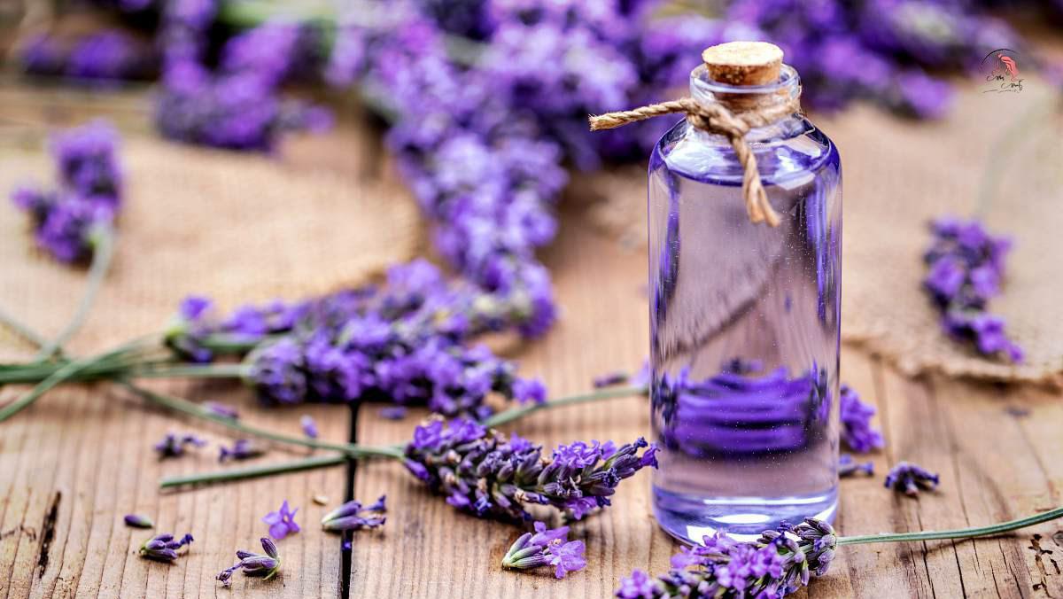 Ý nghĩa của nước hoa oải hương